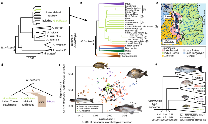 Whole-genome sequences of Malawi cichlids reveal multiple