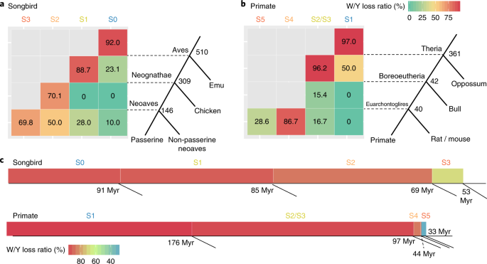 Dynamic evolutionary history and gene content of sex