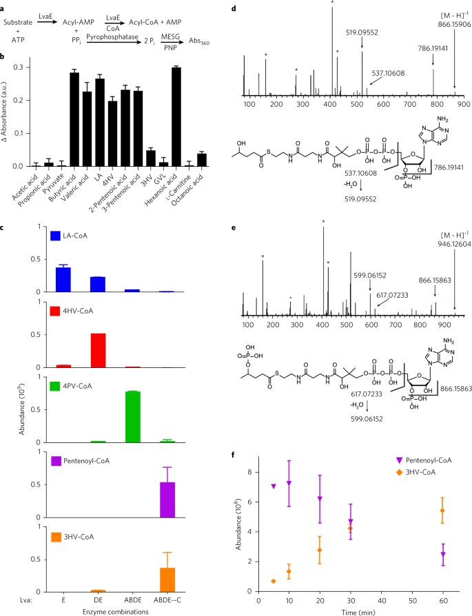 A metabolic pathway for catabolizing levulinic acid in