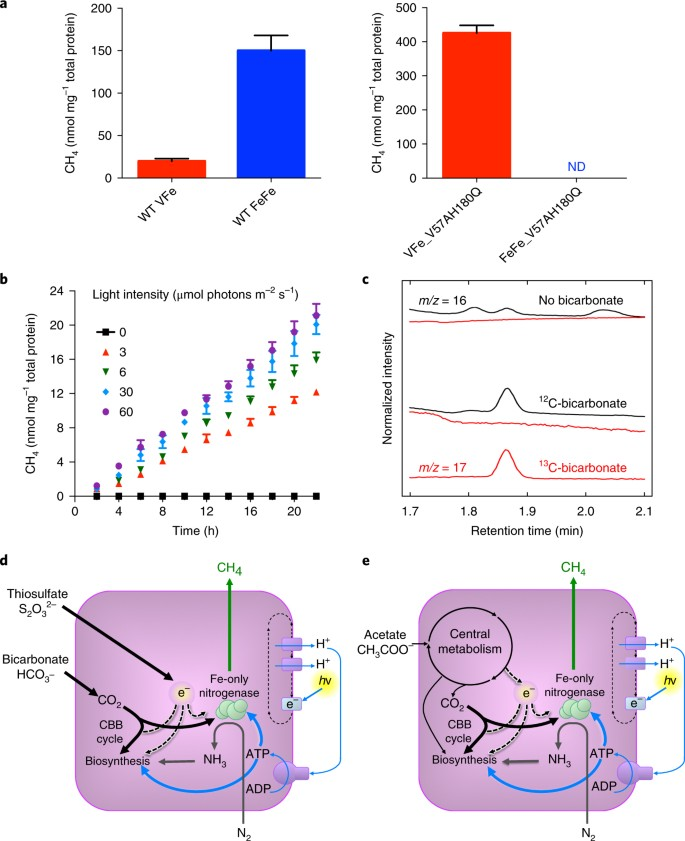 A pathway for biological methane production using bacterial