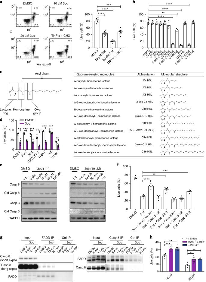 Pseudomonas aeruginosa quorum-sensing metabolite induces
