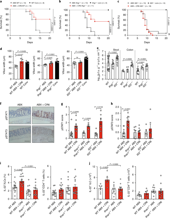 IFN-I and IL-22 mediate protective effects of intestinal