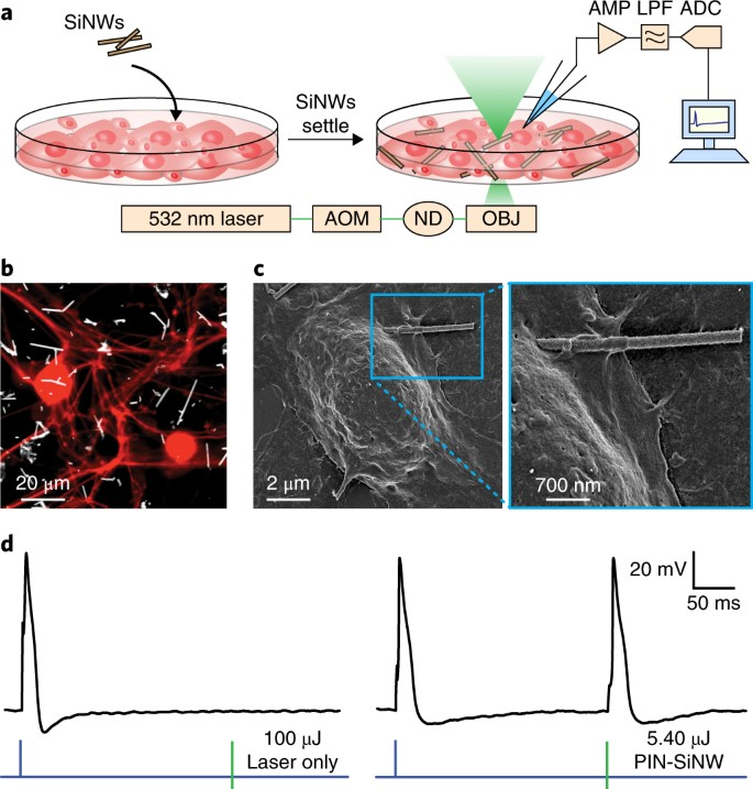 Photoelectrochemical modulation of neuronal activity with
