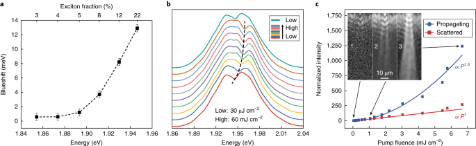 Interacting polariton fluids in a monolayer of tungsten