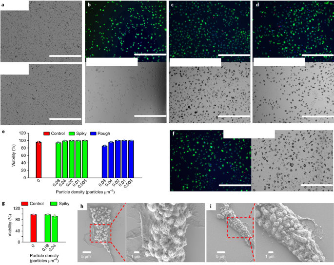 Physical activation of innate immunity by spiky particles