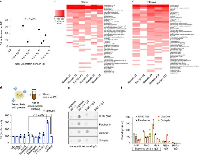 Immunoglobulin deposition on biomolecule corona determines