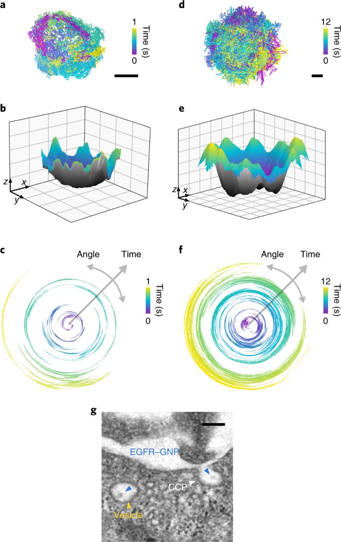 Interferometric scattering microscopy reveals microsecond