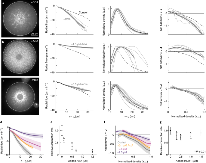 Scaling behaviour in steady-state contracting actomyosin