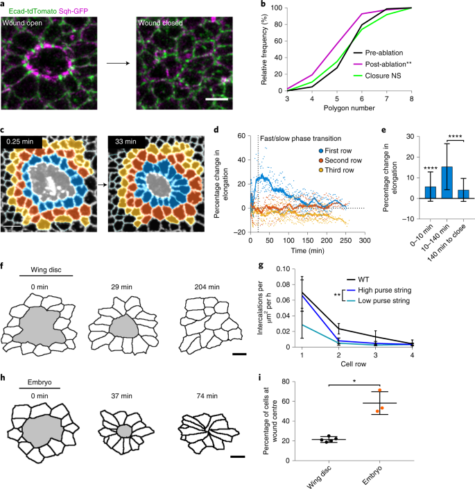 Tissue fluidity promotes epithelial wound healing | Nature Physics