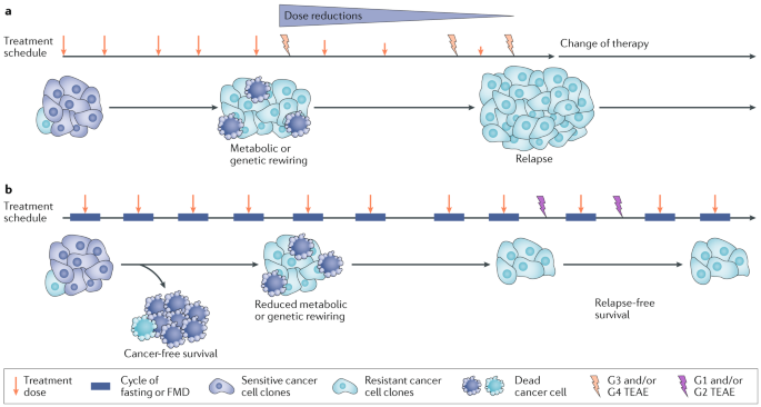Fasting and cancer: molecular mechanisms and clinical