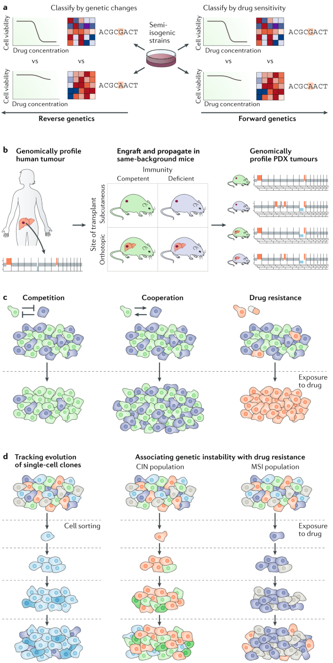 Genomic evolution of cancer models: perils and opportunities