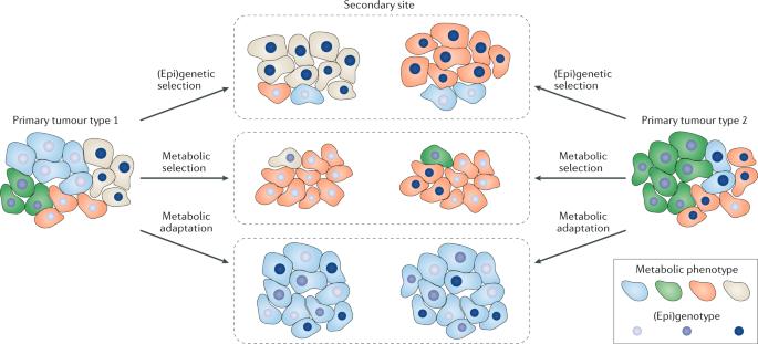 condiloma papillomavirus unguent îndepărtarea condiloamelor în
