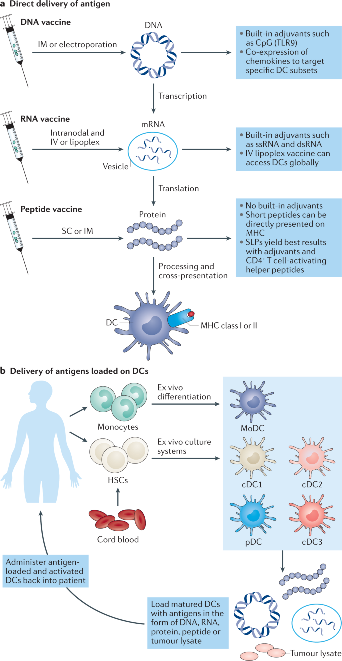 cancer colon vaccin)