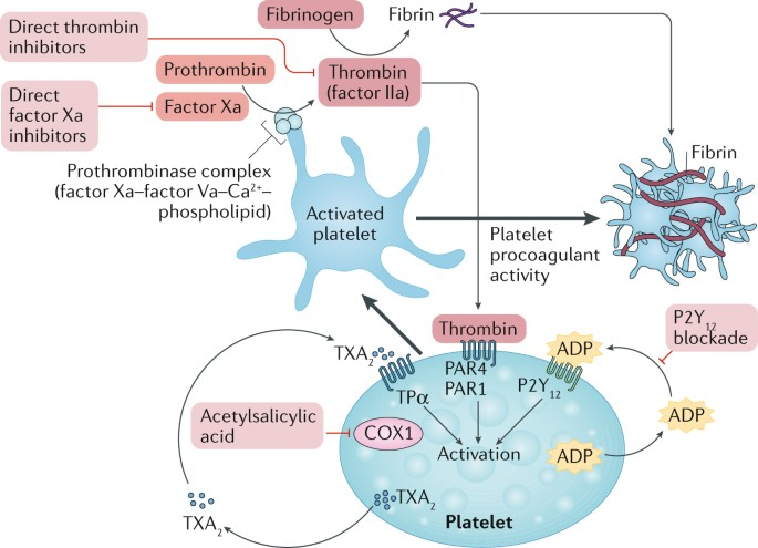 Aspirin-free strategies in cardiovascular disease and