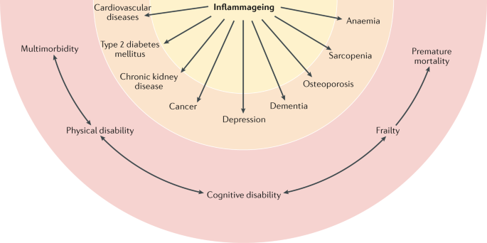 Inflammageing: chronic inflammation in ageing