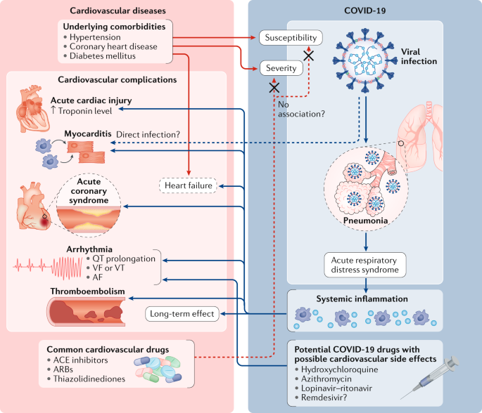 COVID-19 and cardiovascular disease: from basic mechanisms to clinical  perspectives | Nature Reviews Cardiology