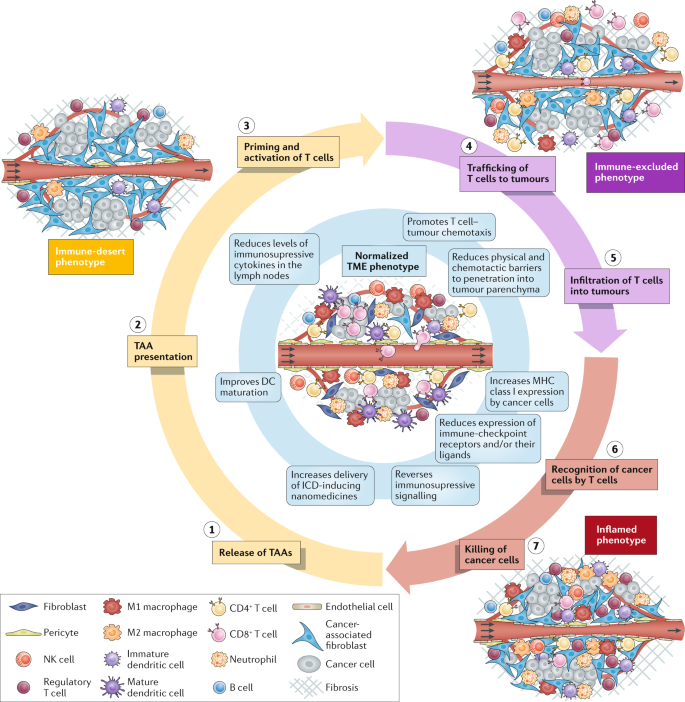 peritoneal cancer immunotherapy