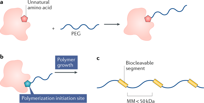 Polymer–drug conjugate therapeutics: advances, insights and