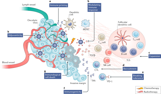 Approaches to treat immune hot, altered and cold tumours with