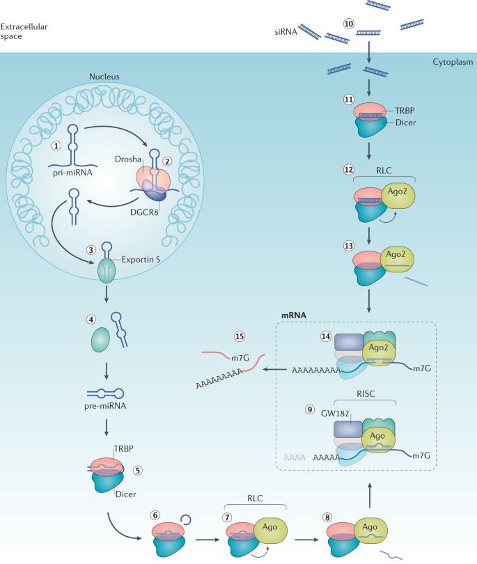 The current state and future directions of RNAi-based therapeutics