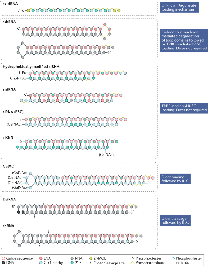 The current state and future directions of RNAi-based