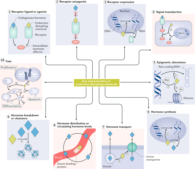 Consensus on the key characteristics of endocrine-disrupting chemicals