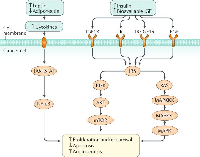 Energy balance and gastrointestinal cancer: risk
