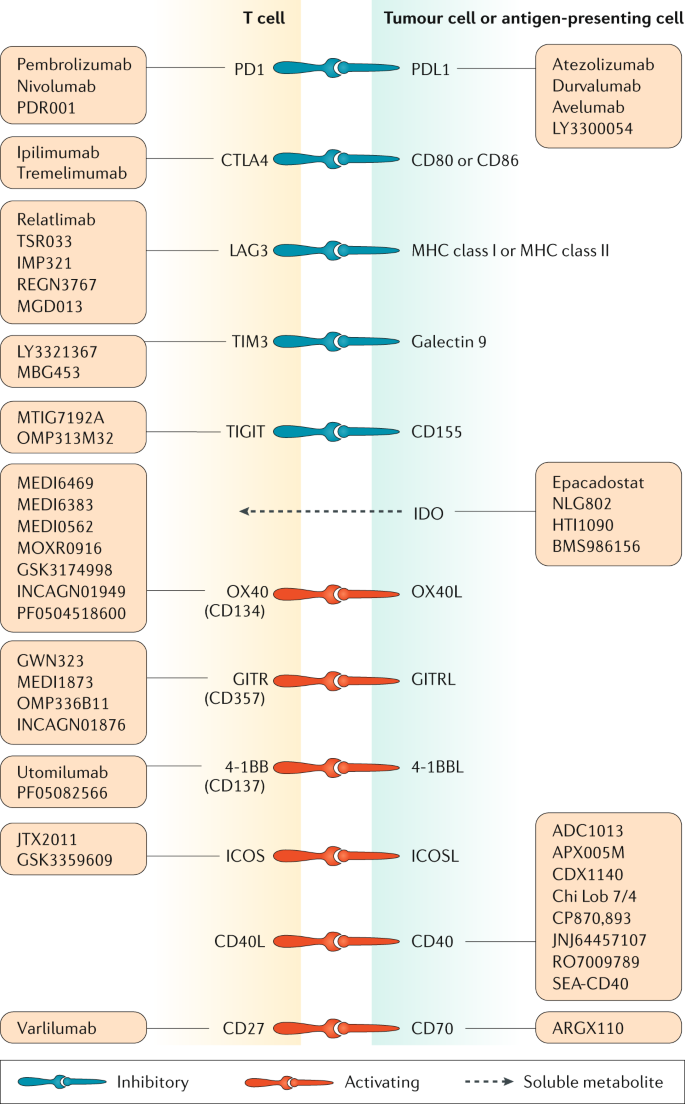 Immunotherapy In Colorectal Cancer Rationale Challenges And Potential Nature Reviews Gastroenterology Hepatology