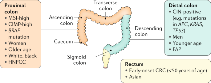 Global Burden Of Colorectal Cancer Emerging Trends Risk Factors And Prevention Strategies Nature Reviews Gastroenterology Hepatology