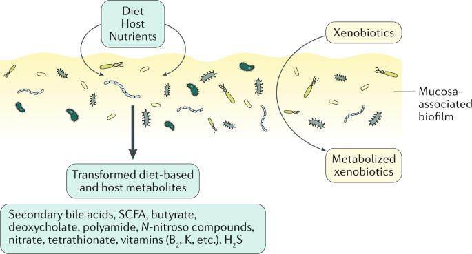Microbiota în bolile ficatului și ale tractului digestiv: revoluția anunțată