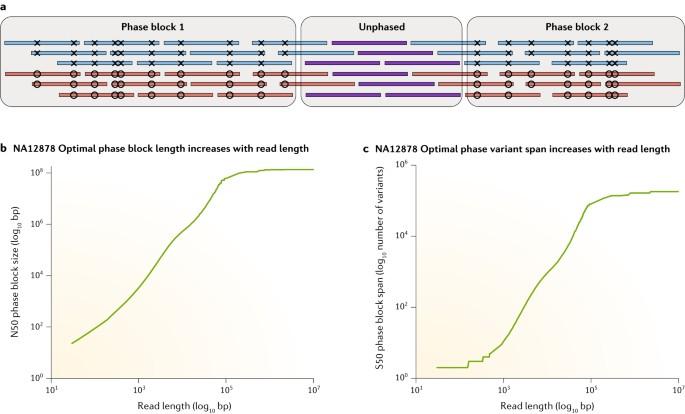 Piercing the dark matter: bioinformatics of long-range