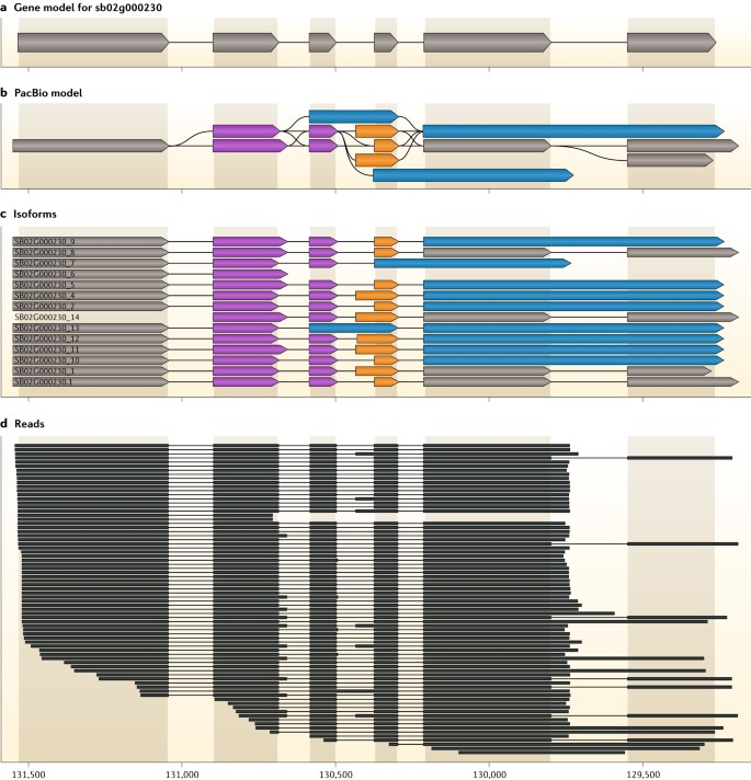 Piercing the dark matter: bioinformatics of long-range sequencing