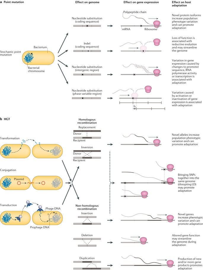 Population genomics of bacterial host adaptation | Nature Reviews
