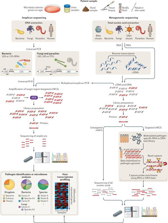 Clinical metagenomics | Nature Reviews Genetics