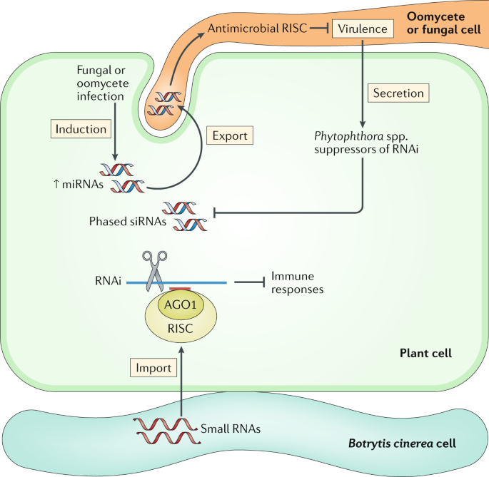Small RNA-based antimicrobial immunity | Nature Reviews Immunology