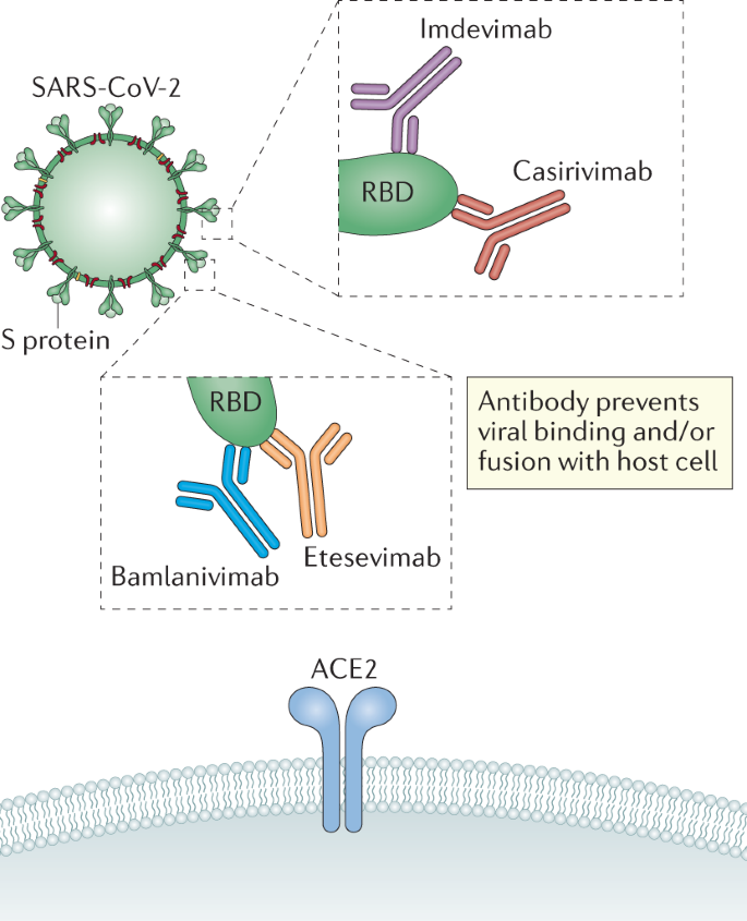 Neutralizing monoclonal antibodies for treatment of COVID-19 | Nature  Reviews Immunology