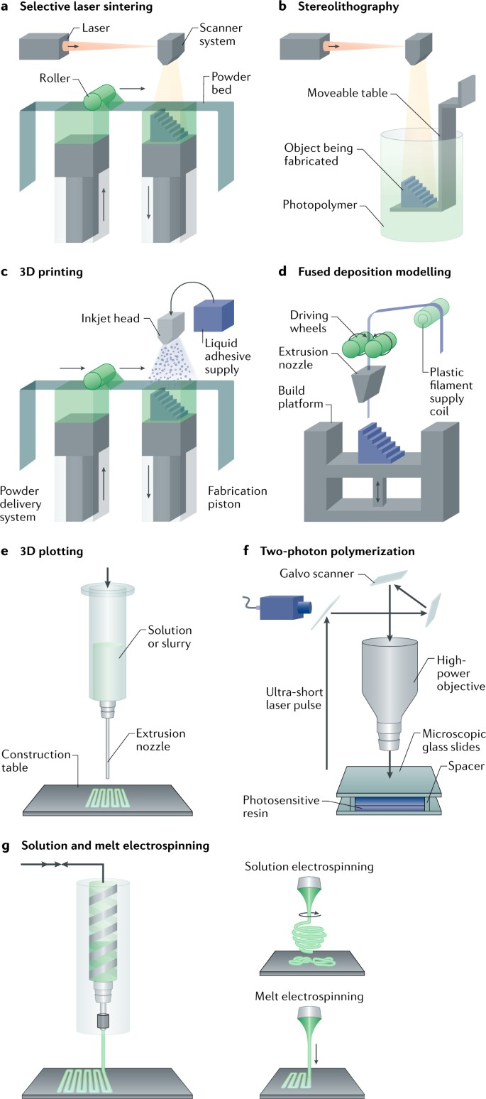 Biofabrication strategies for 3D in vitro models and