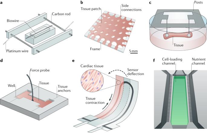 representative organ-on-a-chip devices that model the functions of  elongated parenchymal tissues using different structural templates