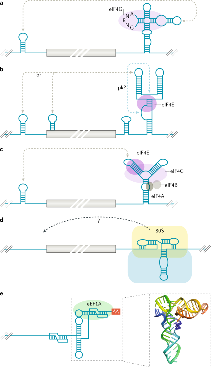 Viral RNA structure-based strategies to manipulate