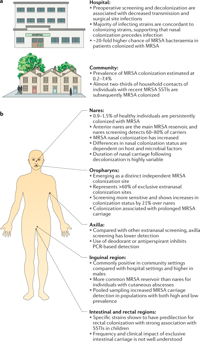Methicillin-resistant Staphylococcus aureus : an overview of basic