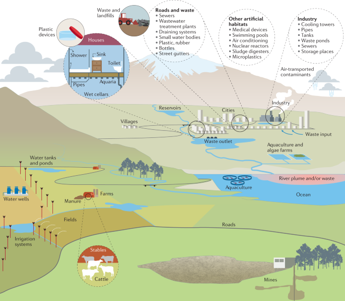 Fungi in aquatic ecosystems   Nature Reviews Microbiology