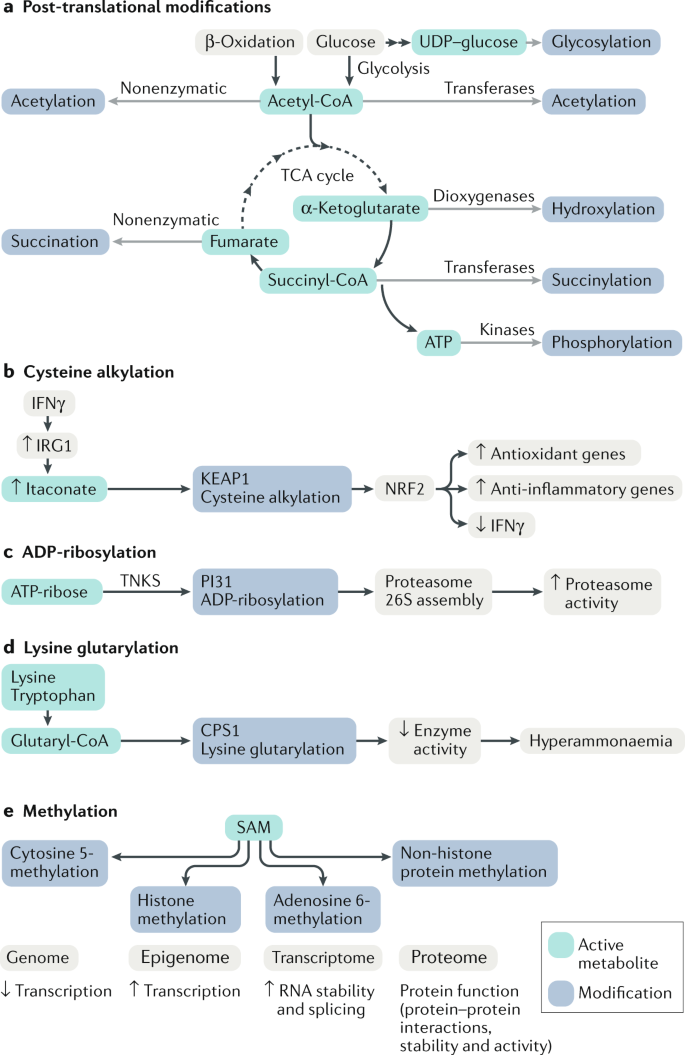 Identification of bioactive metabolites using activity