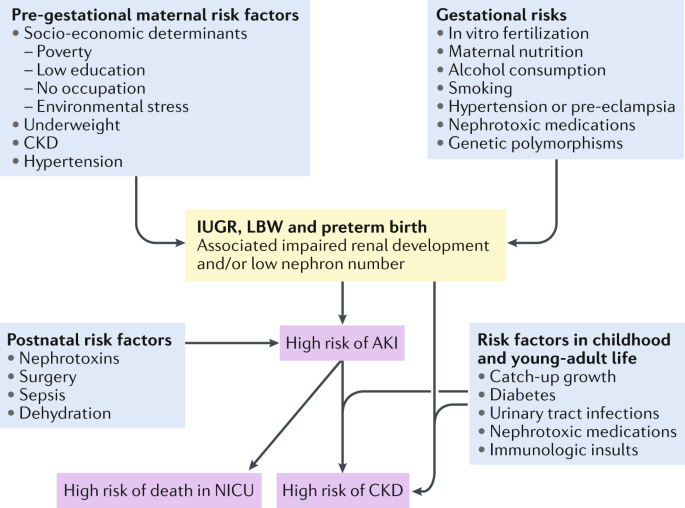 Maternal And Environmental Risk Factors For Neonatal Aki And Its Long Term Consequences Nature Reviews Nephrology
