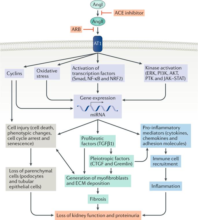 Targeting The Progression Of Chronic Kidney Disease Nature Reviews Nephrology