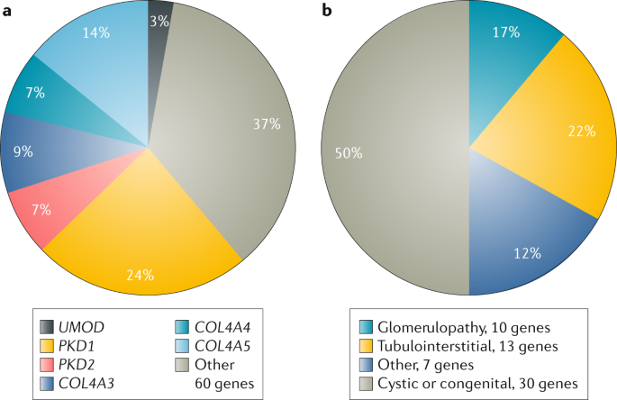 Rare Genetic Causes Of Complex Kidney And Urological Diseases Nature Reviews Nephrology