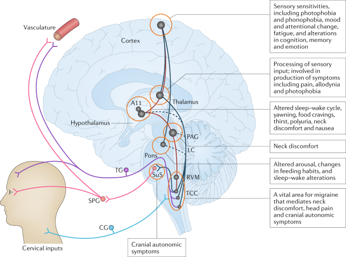 Biological insights from the premonitory symptoms of