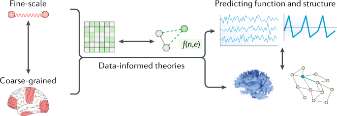 On the nature and use of models in network neuroscience   Nature