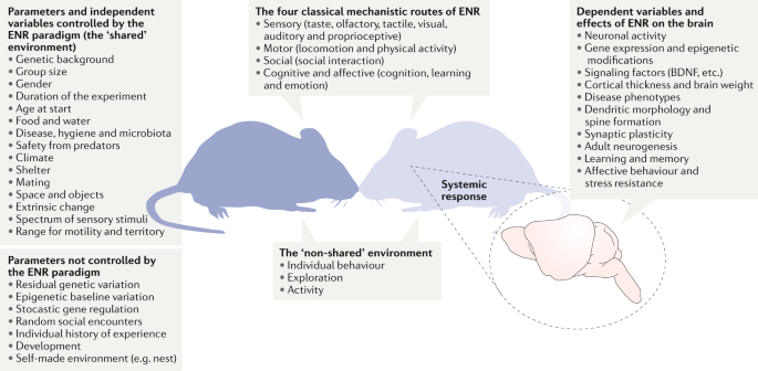 Environmental enrichment, new neurons and the neurobiology