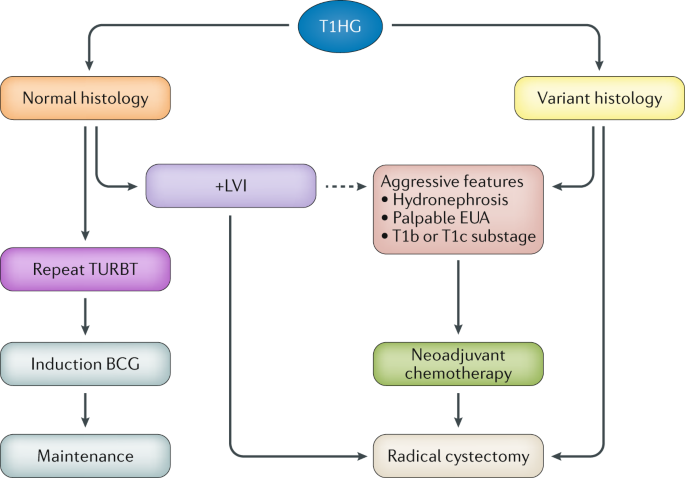 T1 bladder cancer: current considerations for diagnosis and