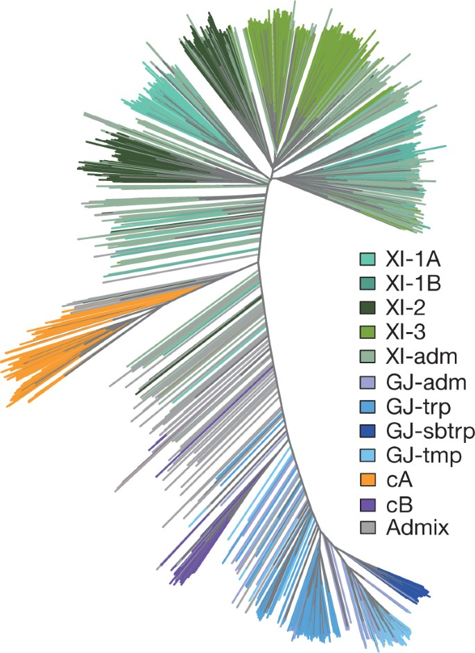 Genomic variation in 3,010 diverse accessions of Asian